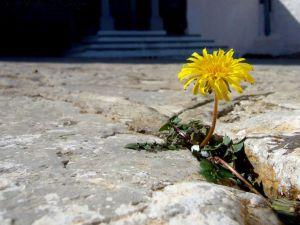 flor-entre-as-pedras_977_1600x1200