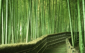 bamboo-japan-greens