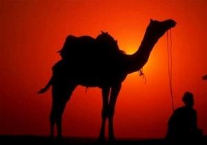 camelo