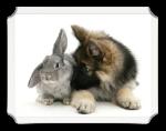 cao e o coelho