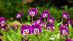 flores-jardim-wallpaper