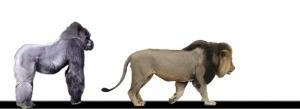 GorillaandAfricanlioncomparison